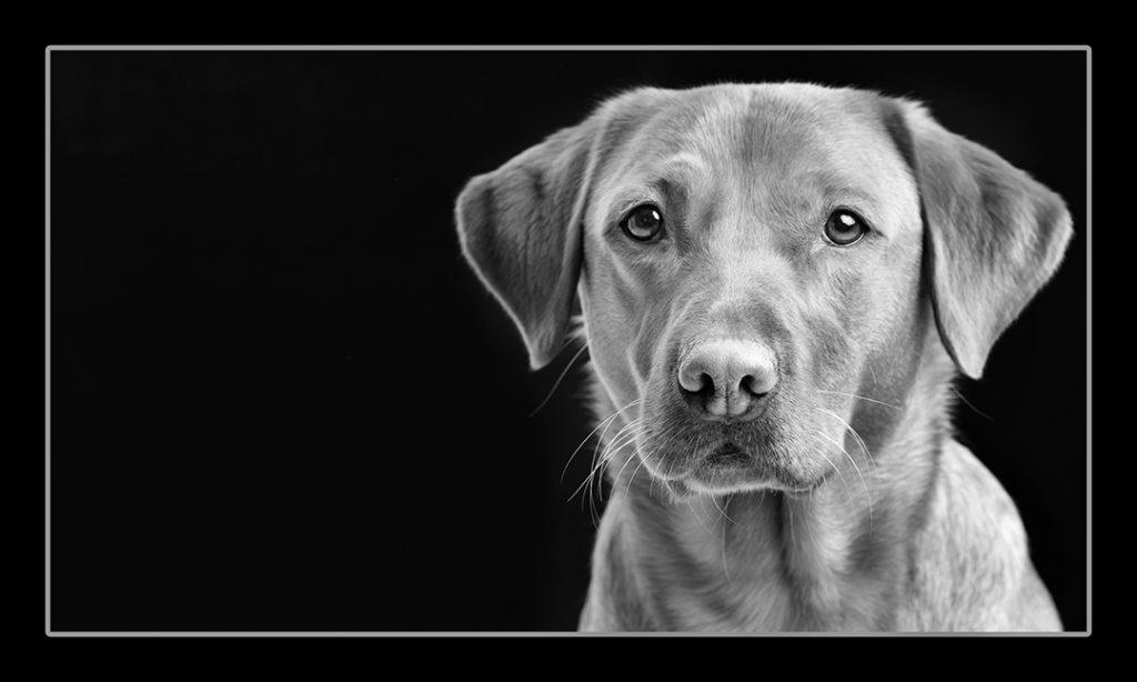 pet photography Dumfries
