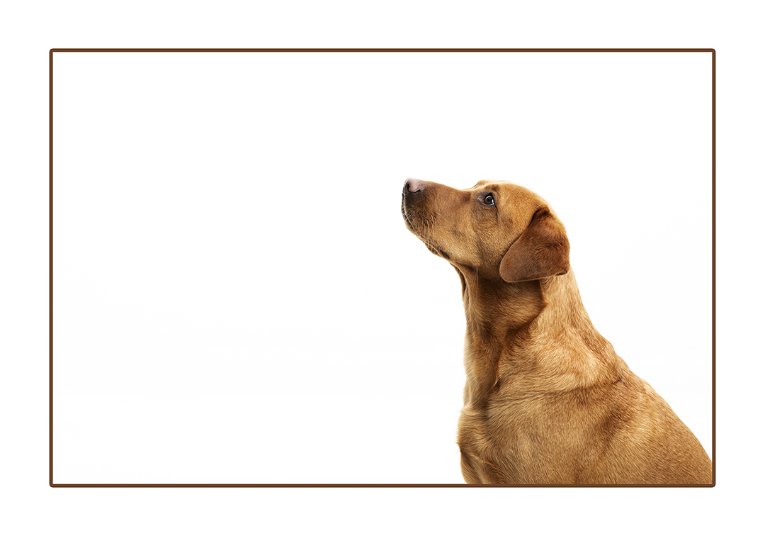 family and pet photographer dumfries