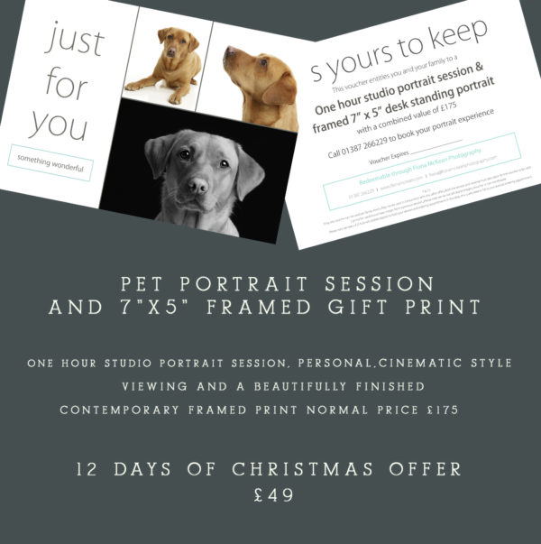 pet portrait gift voucher